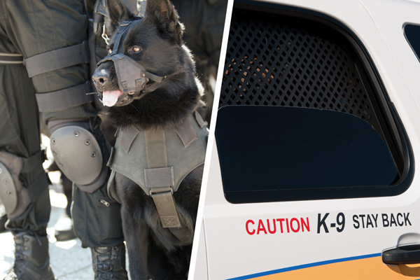 K9 Vehicles For Police Naffco Fzco